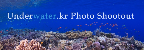 Shootout at NAD Lembeh Resort